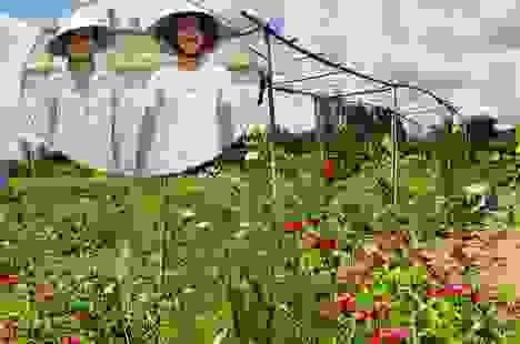 Sang Israel học trồng rau sạch, vợ chồng Việt về quê mở nông trại 6.000m2