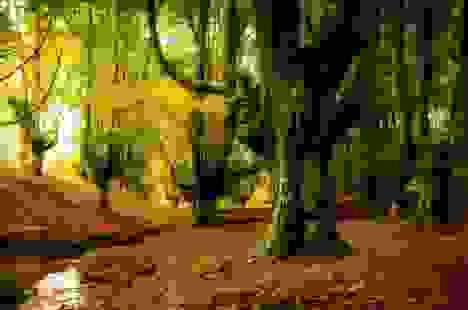 """Các nhà khoa học lên kế hoạch tạo ra khu rừng """"thế hệ mới"""""""