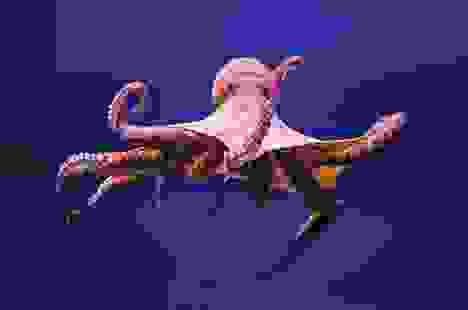 Hé lộ bí mật của quái vật biển cả có 3 trái tim, 9 bộ óc