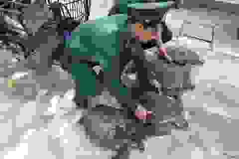 Trả tự do cho... 4 cá thể rùa