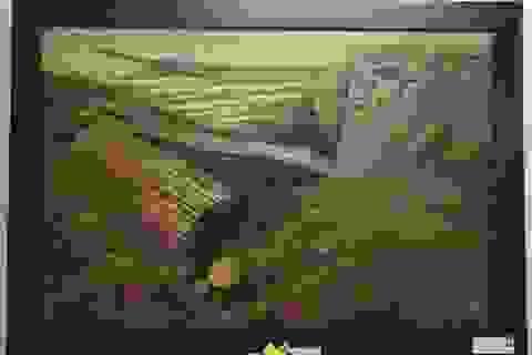 Triển lãm mỹ thuật khu vực Nam miền Trung và Tây Nguyên lần thứ 21