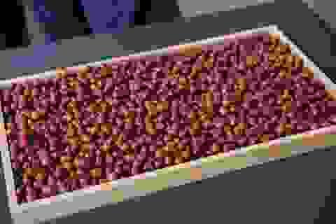 Vpresso ra mắt 7 dòng cà phê rang xay độc đáo