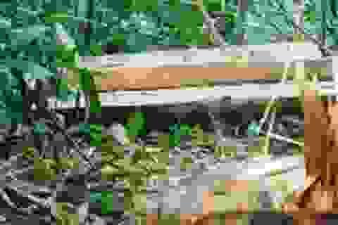 Bắt đối tượng tấn công cán bộ BQL rừng phòng hộ Sông Tiêm