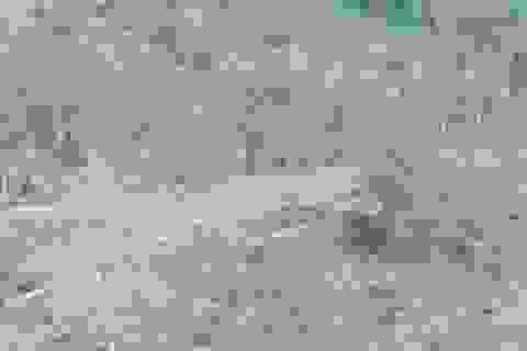Dân ồ ạt đốt rừng chiếm đất