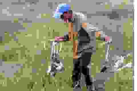 Một đêm tiêu diệt 700 con chuột