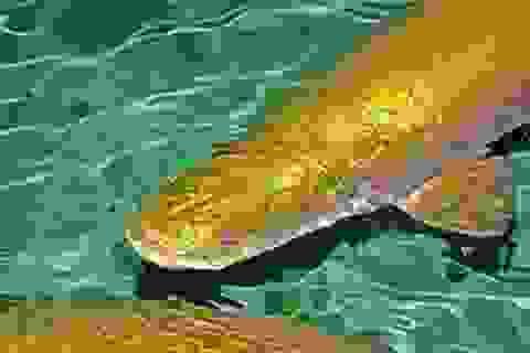 Mất trộm hai con cá hải tượng quý hiếm trị giá 140 triệu