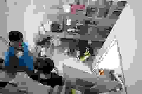 """Hà Nội: """"Biệt đội"""" giải cứu chó mèo"""