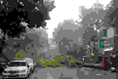 Hà Nội: Gió quật đổ cây, giật tung cột điện
