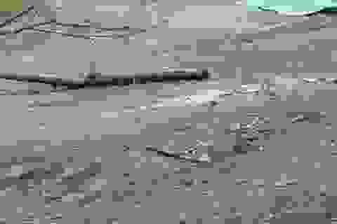 Người đàn ông chết ở bìa rừng: Bị giết do mâu thuẫn đất đai