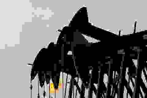 Giới đầu cơ đang tháo chạy khỏi thị trường dầu