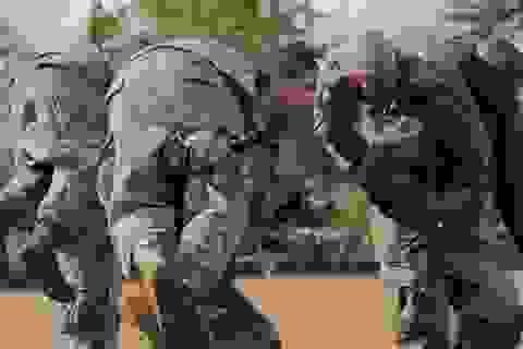 Gặp gỡ hai nữ biệt kích đầu tiên của quân đội Mỹ