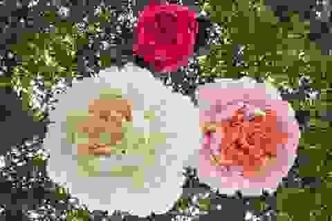 Những bông hoa giấy sống động y như thật