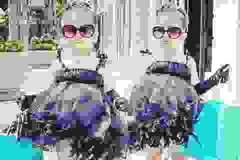 Cặp chị em song sinh 4 tuổi sành điệu nhất Instagram