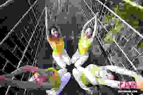 Hơn 100 người mạo hiểm đồng diễn yoga trên cầu thủy tinh