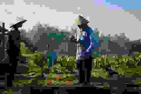 Báo Mỹ ca ngợi cộng đồng người Việt ở New Orleans