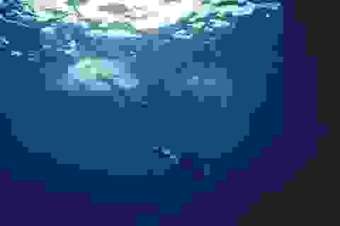 Bộ ảnh cưới dưới lòng đại dương tuyệt đẹp của cặp đôi đồng tính nữ