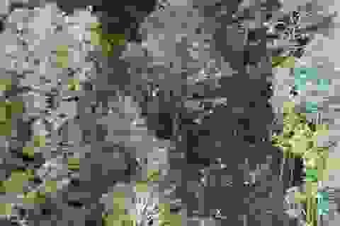 Indonesia công bố hình ảnh đầu tiên về hiện trường tai nạn máy bay