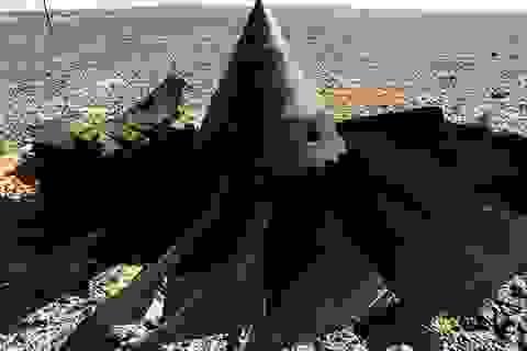 Có dấu vết vụ nổ từ thi thể nạn nhân máy bay Nga