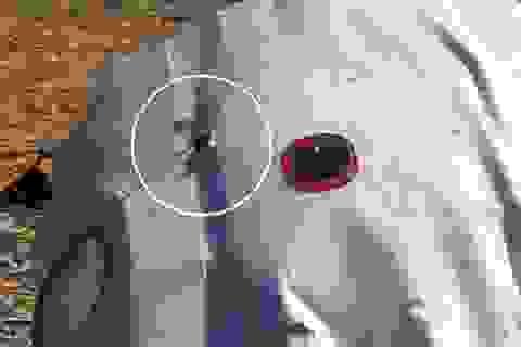 Dữ liệu hộp đen cho thấy máy bay Nga bị nổ bất ngờ