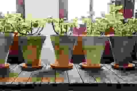 Trồng cây trong nhà giúp cải thiện sức khỏe con người?
