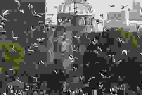 70 năm thay da đổi thịt của Hiroshima
