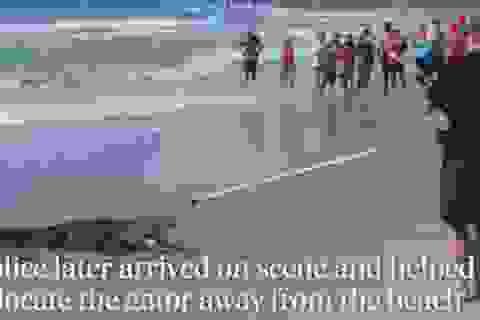 """Cá sấu hơn 2m """"dọa"""" du khách chạy tán loạn"""