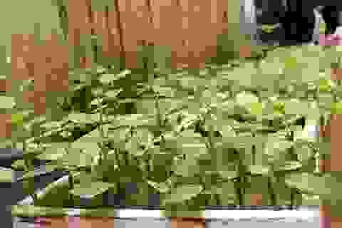 """Lạc vào những """"vườn rau mini"""" của người dân Hà Nội"""