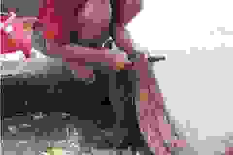 Kiếm bạc triệu mỗi ngày từ cá linh non