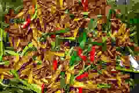 Lạ miệng món ăn từ côn trùng đậm chất đồng quê
