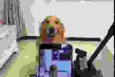 Chó cười tạo dáng trước ống kính