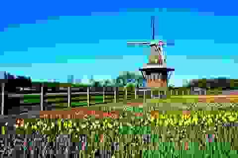 Du học chất lượng cao chi phí thấp tại Hà Lan