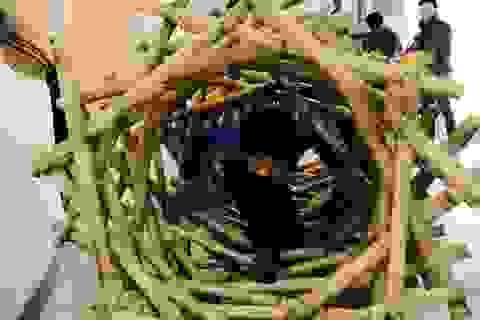 Chiêm ngưỡng mô hình Toán khổng lồ đầu tiên tại Việt Nam