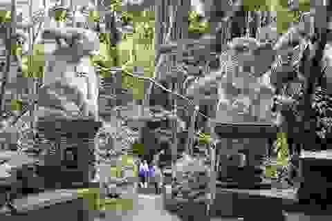 Vương quốc loài khỉ giữa rừng già Bali