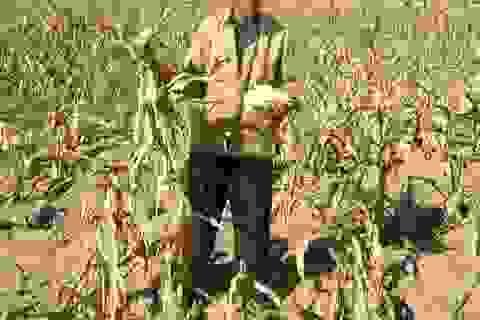 2015: Thời tiết dị thường báo hiệu một mùa khô hạn khốc liệt