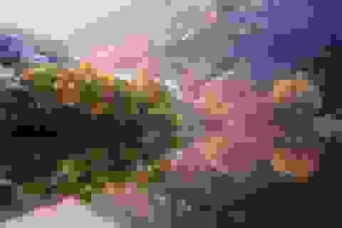 Ngẩn ngơ trước vẻ đẹp tiên cảnh ở Hàn Quốc