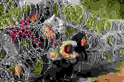 Nhức nhối khủng hoảng di cư