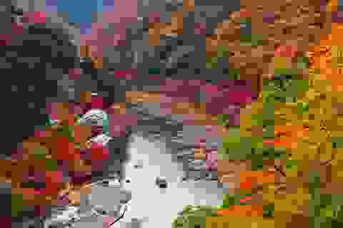 Lãng mạn sắc thu Đông Bắc Á
