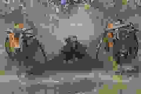 """Ngày hội """"đua với tử thần"""" ở Indonesia"""