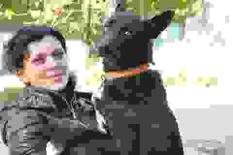 Chó đi bộ 300 km quay về với chủ