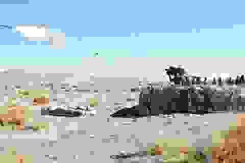 Các nhóm khủng bố ở Syria sở hữu tên lửa Mỹ