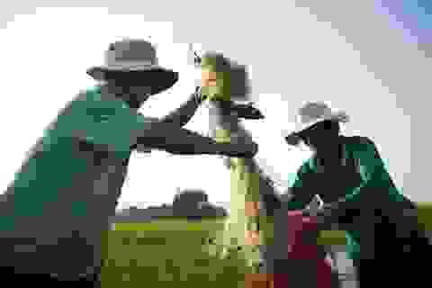 Cải thiện đời sống người dân Tràm Chim từ dự án phát triển du lịch