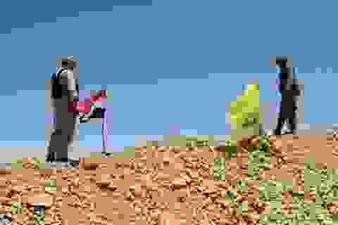 Quân Syria ở Palmyra thêm viện trợ, IS chết như ngả rạ