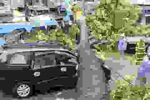 Hà Nội: 1 người chết, 5 người bị thương, gần 700 cây xanh gãy đổ