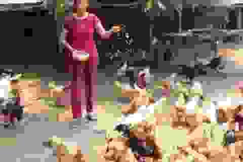 Hiểu gà, gà cho tiền tỉ