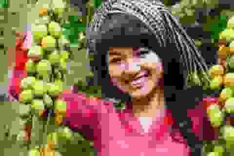 Khám phá 5 miệt vườn trái cây quanh Sài Gòn ít ai biết