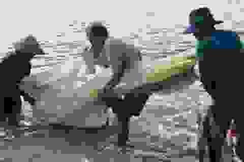 Quảng Ngãi: Theo chân ngư dân bãi ngang kéo trũ bắt cá