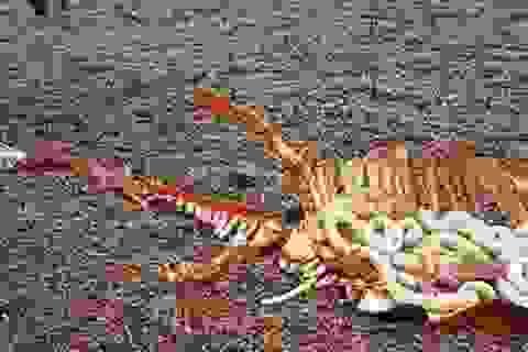 Phát hiện xác quái vật hồ Loch Ness?