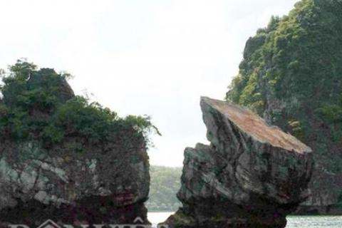 """Thiên Nga trên vịnh Bái Tử Long bị... """"mất đầu"""""""