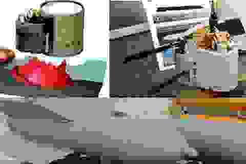 """Nga ném bom """"nhảy dù"""" diệt xe tăng IS ở Syria"""