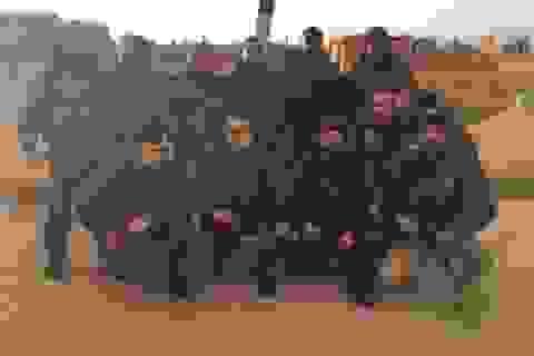 Nồi hơi Palmyra khởi động: IS tê liệt, thủ lĩnh chết thảm